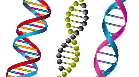 nêu đặc điểm cấu tạo hóa học của adn